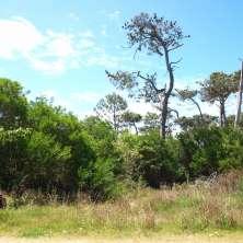 Terreno situado a pocas cuadras de Playa Serena, Balneario La Paloma