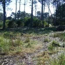 Terreno en venta en La Paloma, en una zona de constante desarrollo