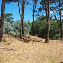 Terreno esquina en venta en una hermosa zona de bosque de pinos del balneario La Paloma