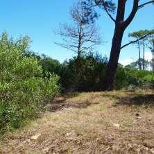 Lote ubicado en una hermosa zona de bosque de pinos llamada Anaconda, Balneario La Paloma