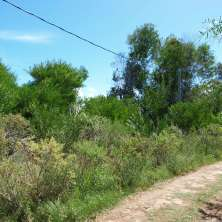 Corner lot for sale in a natural and peaceful area called Playa Serena, in La Paloma resort