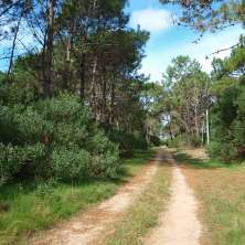 Land Plot for sale surrounded by pine trees area known as Anaconda, in La Paloma resort
