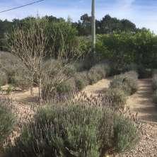 Jardín de Lavandas