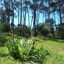 Nice lot for sale located on a main Avenue in La Paloma coastal resort