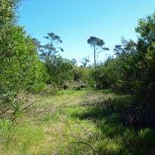 Terreno en un entorno de bosque en Playa Serena dentro del Balneario La Paloma