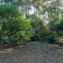Lot for sale located in a pine trees forest area next to an access road in Barrio Parque neighborhood