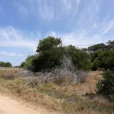 Really nice land lots for sale in great location in Playa Serena area with pine trees forest