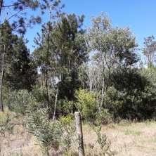 Land lot for sale located in Playa Serena area near Del Navio Avenue, La Paloma beach resort